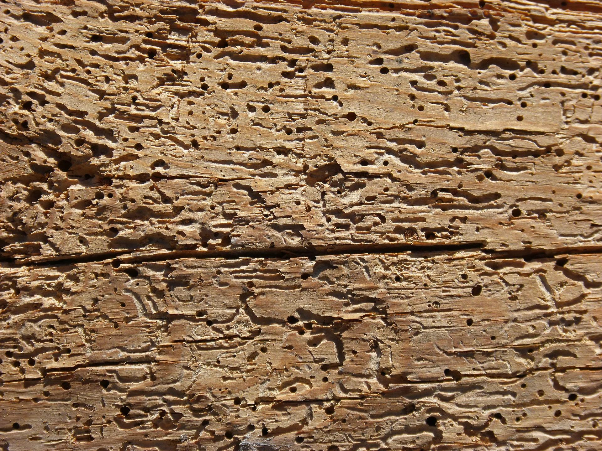 Daños por termitas